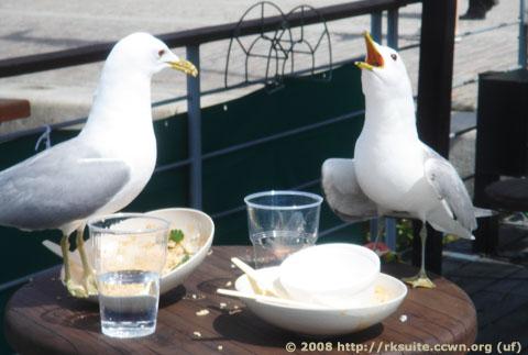 Restaurantgäste
