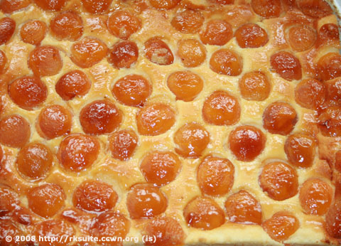 Aprikosen-Quark-Kuchen_1