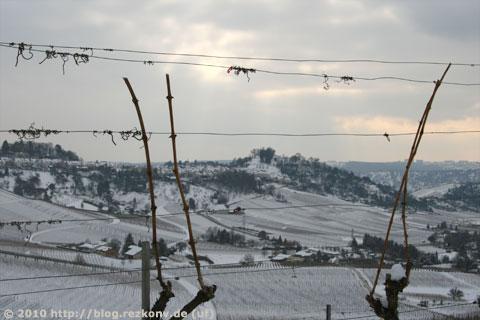 Reben am Kappelberg mit Blick auf Rotenberg