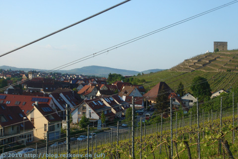 Im Weinberg mit Blick auf Yburg und alte Kelter